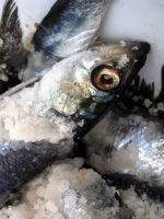 Uneviscerated Fish Lawsuit