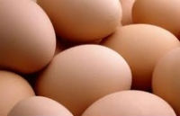 Larry Schultz Organic Farm Egg Recall Lawsuit