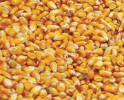 Syngenta GMO Corn Seed Lawsuit