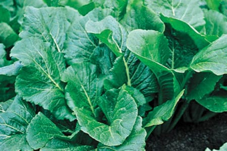 Turnip Greens Lawsuit