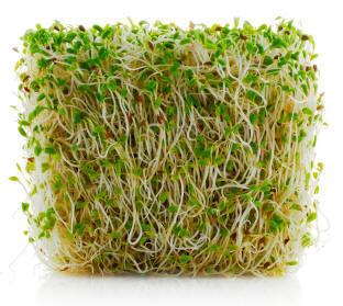 alfalfa sprout recall lawsuit