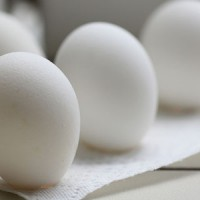 egg-recall-salmonella-lawsuits