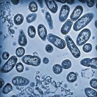 salmonella_outbreak_eggs